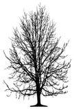 Árbol aislado Foto de archivo