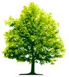 Árbol aislado libre illustration
