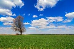 Árbol aislado Imágenes de archivo libres de regalías