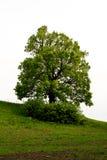 Árbol aislado en el campo Fotos de archivo libres de regalías