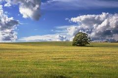 Árbol aislado en el cielo del campo y de la belleza encendido lejos Fotos de archivo
