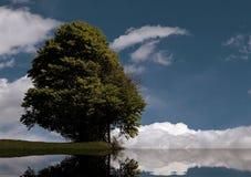 Árbol aislado en el medio del prado en las montañas Fotos de archivo