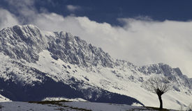 Árbol aislado en las montañas en invierno Fotografía de archivo