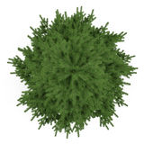 Árbol aislado. Top del abeto del pinus Fotos de archivo libres de regalías