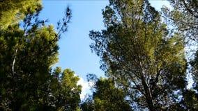 Árbol al aire libre metrajes