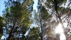 Árbol al aire libre almacen de video