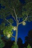 Árbol al aire libre con las luces y el cielo azul circulares adornados de la noche Imagen de archivo