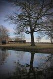 Árbol al lado del río Fotos de archivo