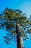 Árbol alto Imagenes de archivo