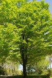 Árbol alto Imagen de archivo libre de regalías