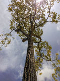 Árbol alto Fotos de archivo