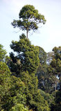 Árbol alto Fotografía de archivo