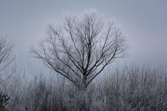 Árbol alto cubierto con nieve Foto de archivo