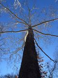 Árbol alto de la caída Imagen de archivo libre de regalías