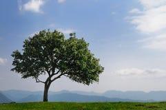 Árbol alto en las montañas fotos de archivo