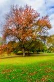 Árbol alto en otoño imagen de archivo