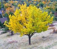 Árbol amarillo foto de archivo