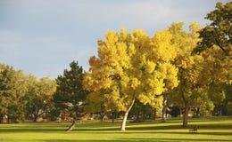 Árbol amarillo en un parque imagenes de archivo