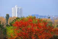 Árbol amarillo, rojo y verde hermoso del otoño en el fondo de un alto rascacielos blanco en la caída en el Dnepr, Ucrania fotografía de archivo