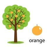 Árbol anaranjado Imagenes de archivo