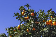 Árbol anaranjado colorido tirado primer fotografía de archivo libre de regalías