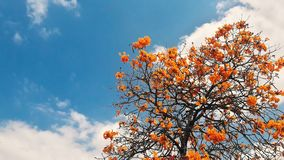 Árbol anaranjado con las nubes blancas fotos de archivo libres de regalías