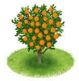 Árbol anaranjado en campo verde Imagenes de archivo