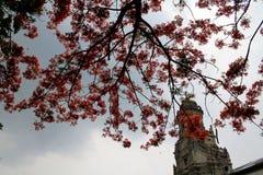 Árbol anaranjado en la iglesia imagenes de archivo