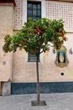 Árbol anaranjado, Sevilla, España Fotos de archivo libres de regalías