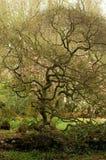 Árbol antiguo Foto de archivo