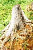 Árbol antiguo Foto de archivo libre de regalías