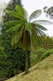 Árbol antiguo en la isla del sao Miguel Fotografía de archivo libre de regalías
