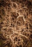Árbol arbustivo seco del grupo Foto de archivo libre de regalías