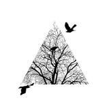 Árbol arreglado en un triángulo Fotografía de archivo