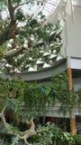 Árbol artificial, espejos, tucán Imagen de archivo