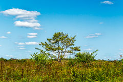 Árbol asoleado Fotos de archivo