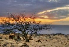 Árbol asoleado de Hawaii Imágenes de archivo libres de regalías