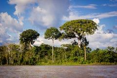 Árbol asombroso del barco de casa de la selva del río Amazonas Foto de archivo