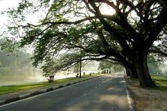 Árbol asombroso fotografía de archivo