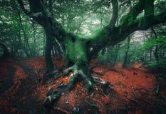 Árbol asustadizo Bosque de niebla oscuro místico Foto de archivo