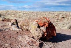 Árbol aterrorizado Foto de archivo libre de regalías