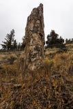 Árbol aterrorizado en Yellowstone Imagenes de archivo