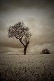 Árbol atmosférico cambiante de la sepia en campo fotografía de archivo libre de regalías