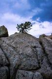Árbol azotado por el viento Fotografía de archivo libre de regalías