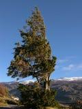 Árbol azotado por el viento en Torres del Paine Fotos de archivo