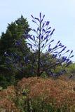 Árbol azul de la botella Foto de archivo