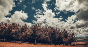 Árbol bajo el cielo imágenes de archivo libres de regalías