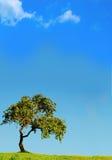 Árbol bajo el sol foto de archivo libre de regalías