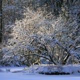 Árbol bajo la nieve imagen de archivo libre de regalías