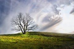 Árbol bajo luz del sol Imágenes de archivo libres de regalías